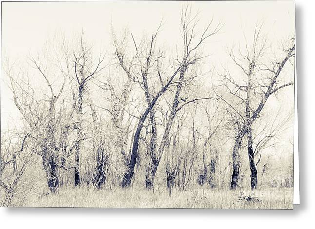 Landscape E10f Taos Nm Greeting Card