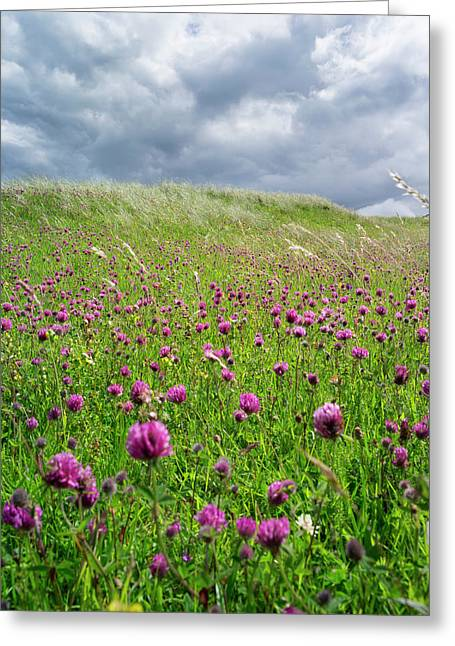 Landscape In The Northern Part Greeting Card by Martin Zwick
