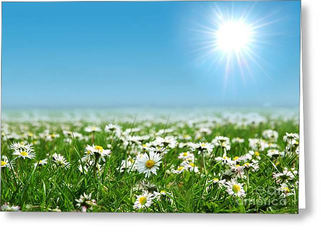 Landscape Vibrant White Flower Greeting Card by Boon Mee