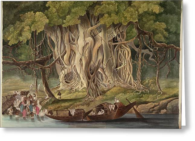 Landscape With Banyan Tree Greeting Card
