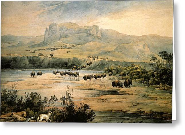 Landscape With Buffalo Ont The Upper Missouri Greeting Card by Karl Bodmer