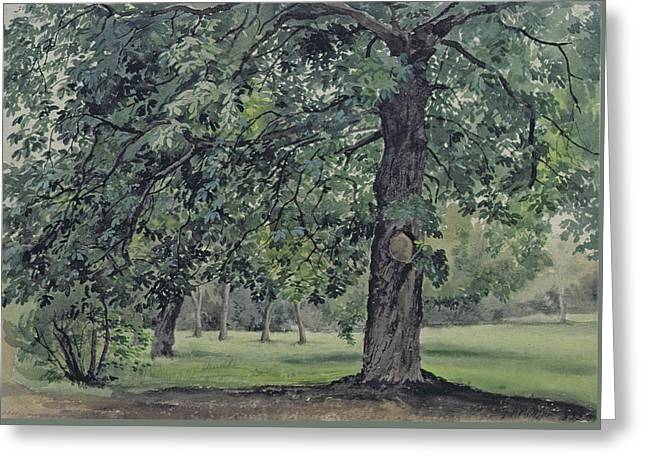 Landscape With Chestnut Tree In The Foreground Greeting Card