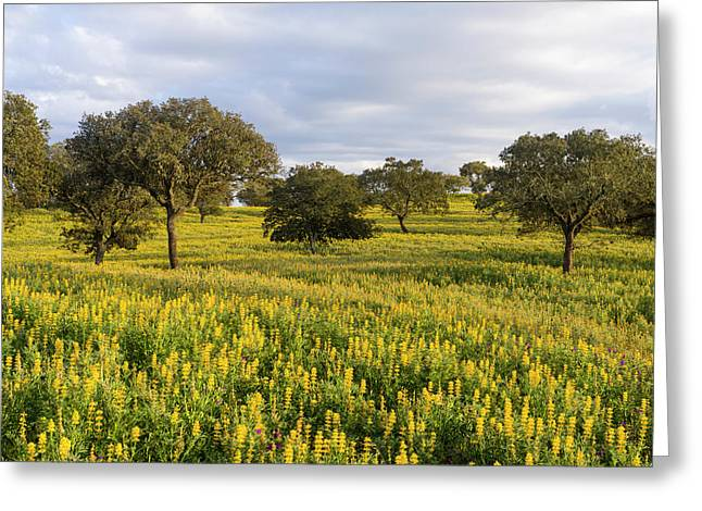 Landscape With Wildflower Meadow Greeting Card