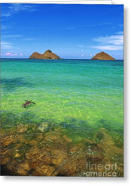 Lanikai Beach Sea Turtle Greeting Card
