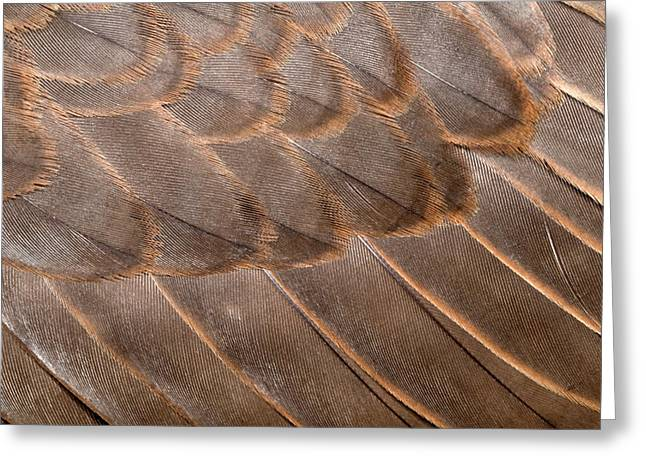 Lanner Falcon Wing Feathers Abstract Greeting Card