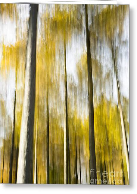 Larch In Abstract Greeting Card by Anne Gilbert