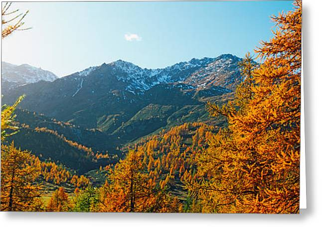 Larch Trees In Autumn At Simplon Pass Greeting Card by Panoramic Images