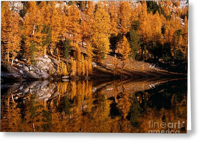 Larch Trees Reflected On Cooney Lake Greeting Card by Tracy Knauer