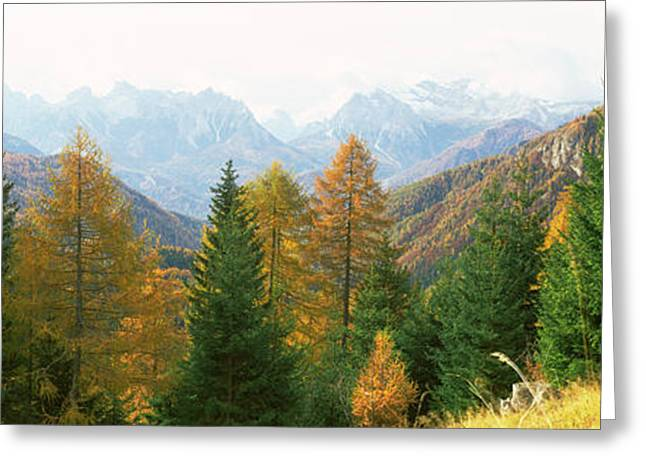 Larch Trees With A Mountain Range Greeting Card