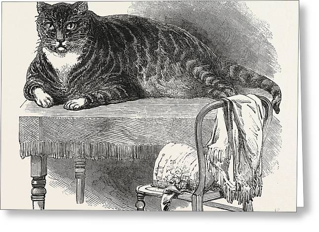 Large Cat, 1850. This Noble Specimen Of The Cat Greeting Card
