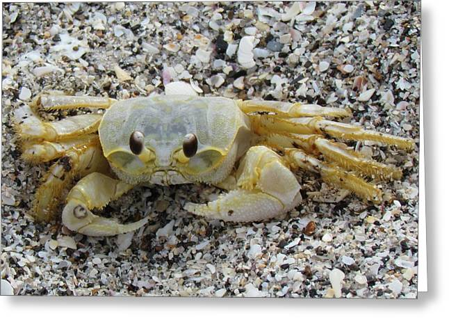 Greeting Card featuring the photograph Ghost Crab by Cynthia Guinn
