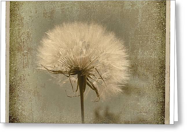 Large Dandelion Greeting Card by Linda Olsen