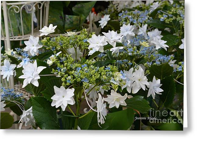 Greeting Card featuring the photograph Shooting Star Bouquet by Jeannie Rhode