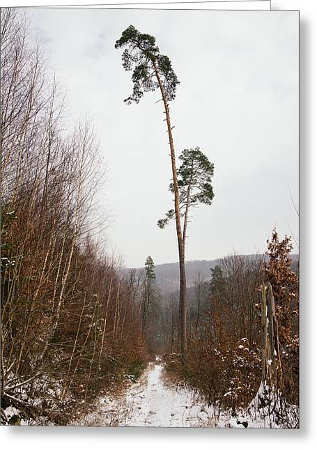 Large Trees In The Nature Park In Winter Greeting Card