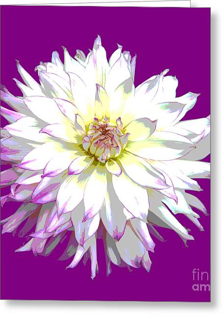 Large White Dahlia On Purple Background. Greeting Card by Rosemary Calvert