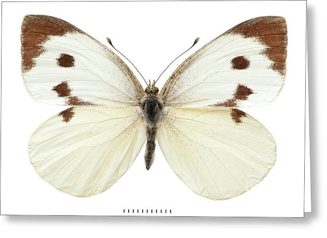 Large White Greeting Card