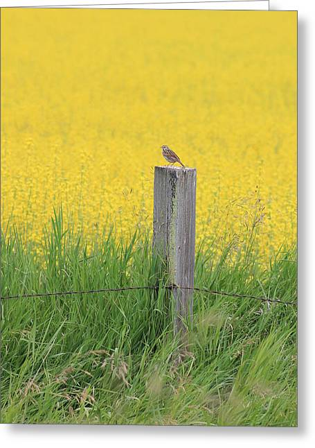 Lark And Canola Greeting Card by Susan Copley
