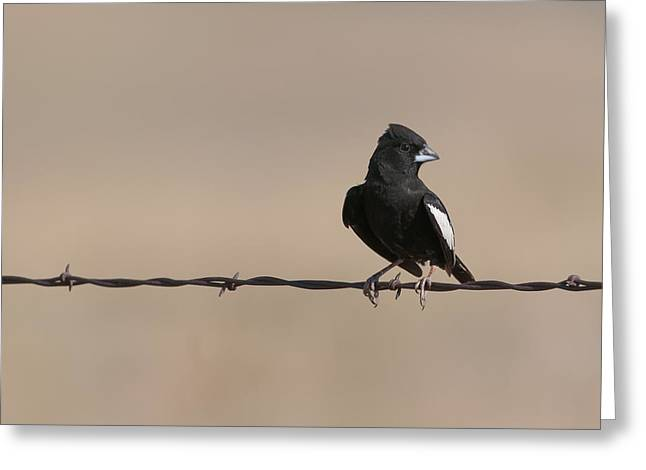 Lark Bunting Greeting Card