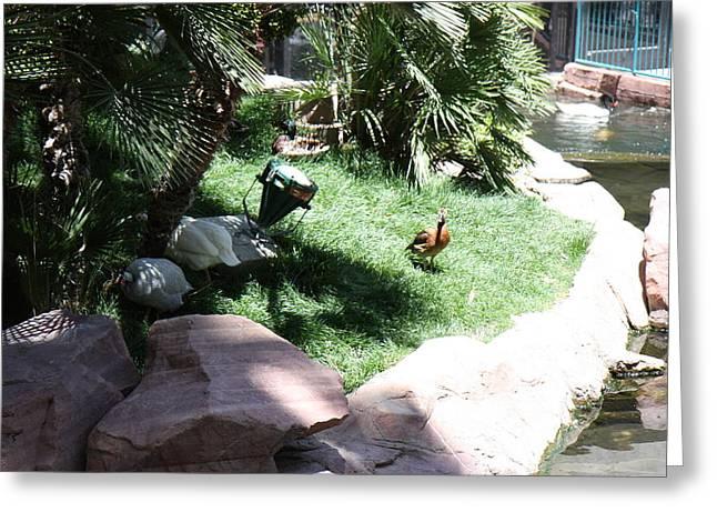 Las Vegas - Flamingo Casino - 12126 Greeting Card by DC Photographer