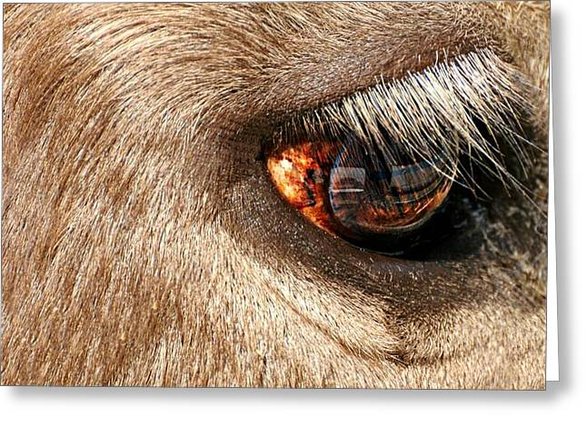 Lashes Greeting Card by Diana Angstadt
