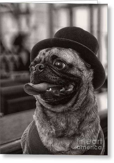 Last Call Pug Greeting Card Greeting Card by Edward Fielding