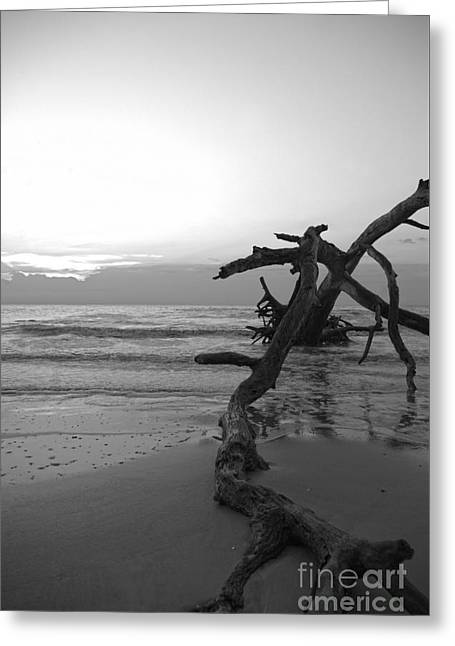 Greeting Card featuring the photograph Last Chance by Glenda Wright