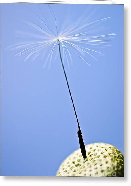Last Dandelion Seed Greeting Card by Elena Elisseeva