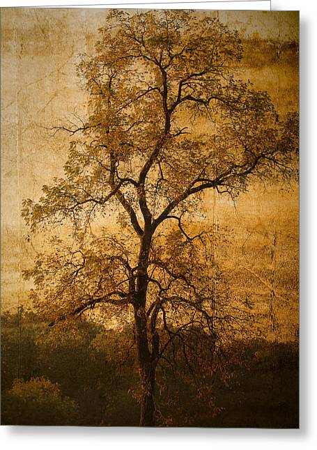 Last Fall Greeting Card by Lena Wilhite