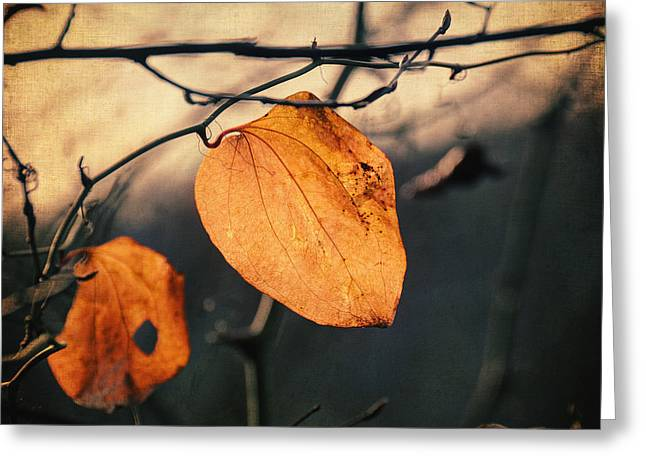 Last Leaves Greeting Card by Taylan Apukovska