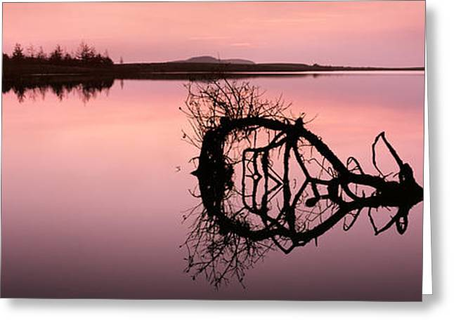 Last Light Greeting Card by Rod McLean