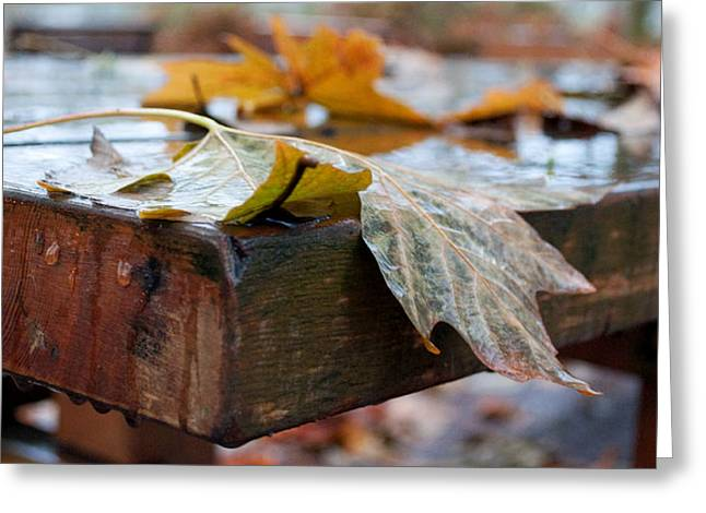 Last Of The Leaves Greeting Card by Gwyn Newcombe