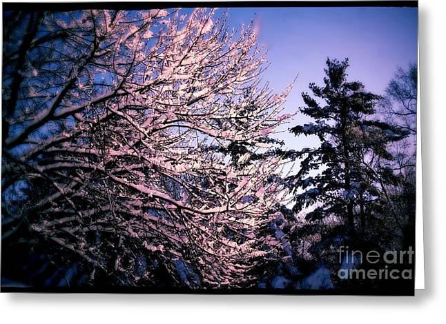 Last Peek Of Winter Sun Greeting Card