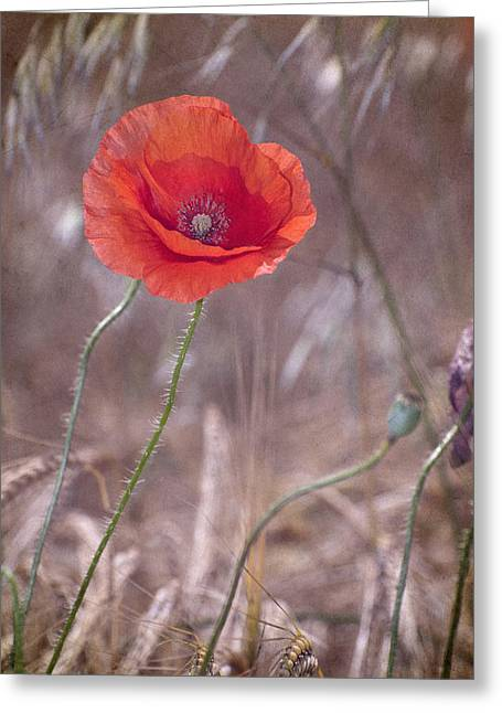 Last Poppy Greeting Card by Guido Montanes Castillo