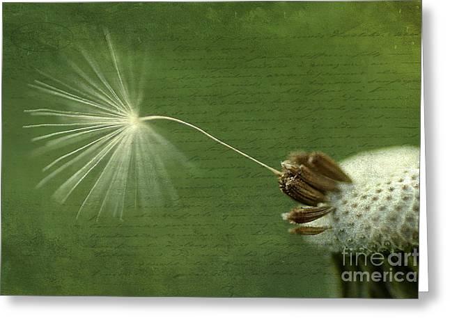 Last Wish Greeting Card