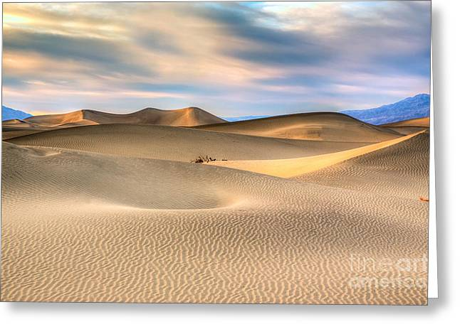 Late Afternoon At The Mesquite Dunes Greeting Card