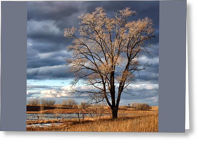 Late Afternoon At Walnut Creek Lake #1 Greeting Card