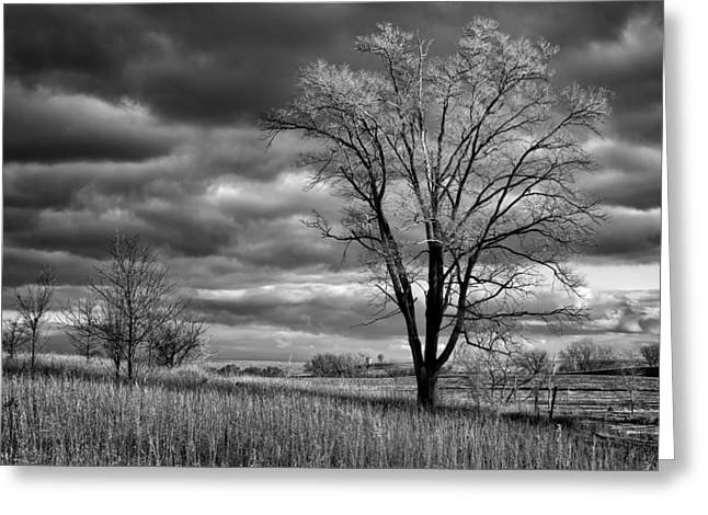 Late Afternoon At Walnut Creek Lake #2 - Black And White Greeting Card