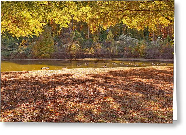 Late Afternoon Autumn Sunshine At The Lake Greeting Card