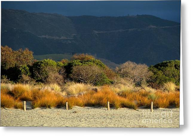 Late Afternoon Colours Greeting Card