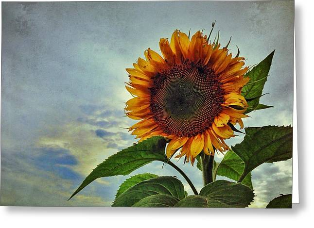 Late August Sun Greeting Card