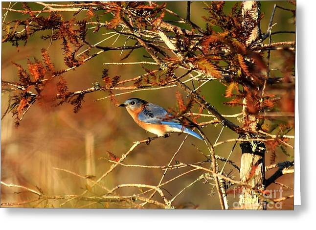 Late Fall Bluebird Greeting Card