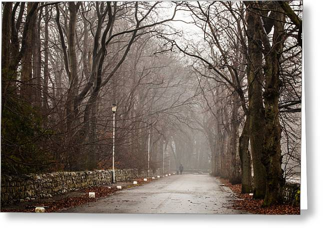 Late Fall Walk Greeting Card by Brian Grzelewski