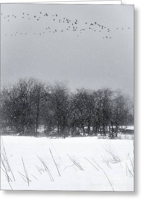 Late Migration Greeting Card by Michele Steffey