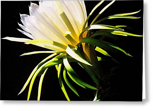 Greeting Card featuring the photograph Desert Beauty by Mistys DesertSerenity
