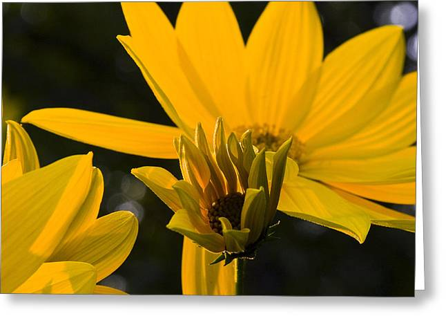 Greeting Card featuring the photograph Late Summer Blooms by Michael Friedman