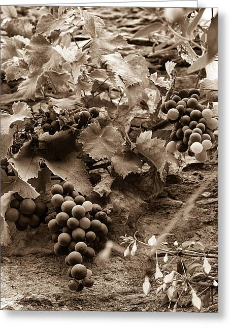 Late Summer Grapes - Toned Greeting Card