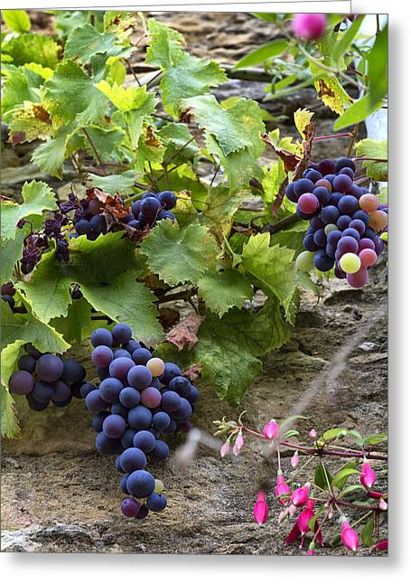 Late Summer Grapes Greeting Card