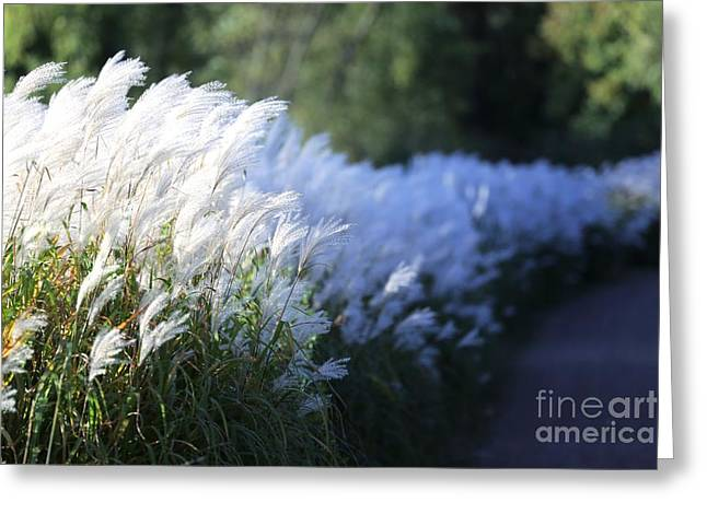 Late Summer Path Greeting Card