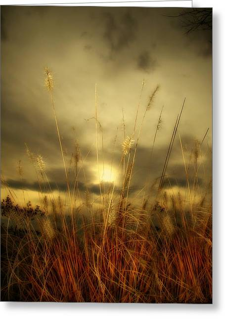 Late Summer Sun Through The High Grass Greeting Card by Gothicrow Images