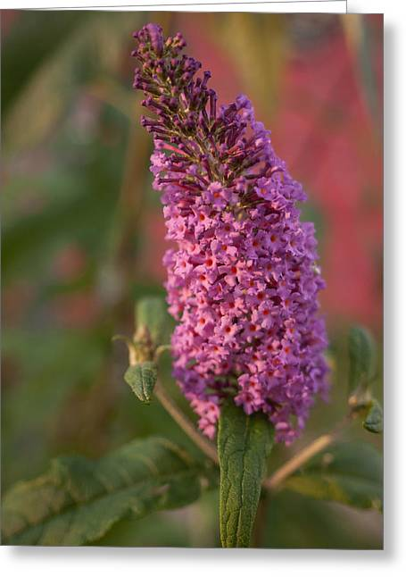 Late Summer Wildflowers Greeting Card